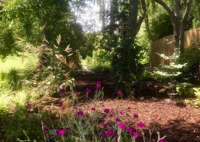 Claire-Carter-Gardens---A-Garden-Transformation--(3)