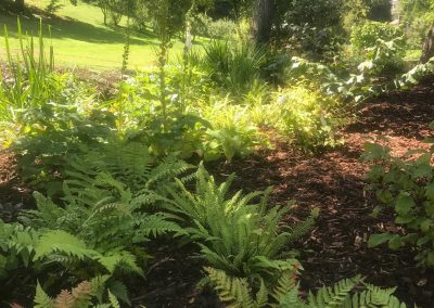 Claire-Carter-Gardens---A-Garden-Transformation--(4)