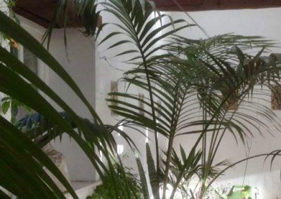 Claire-Carter-Gardens---Indoor-gardens