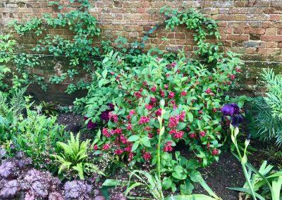 Claire-Carter-Gardens---Walled-Garden-Pics-4