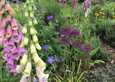 Claire-Carter-Gardens---jennifers-garden-3
