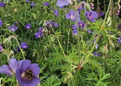 Claire-Carter-Gardens---jennifers-garden-4
