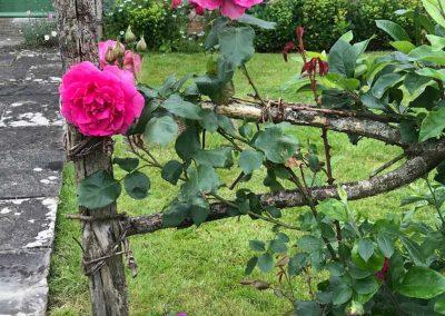 Claire Carter garden designer somerset
